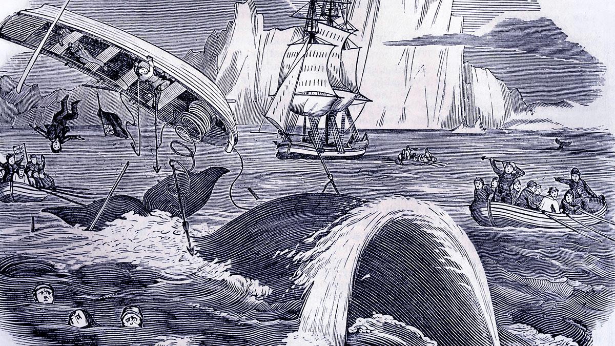 White Whales
